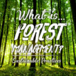 What is Forest Management? | Sustainable Practices